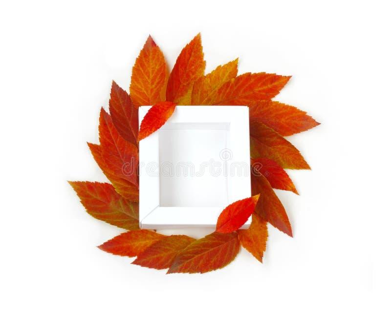 秋天嘲笑与白方块框架,红色离开 库存图片