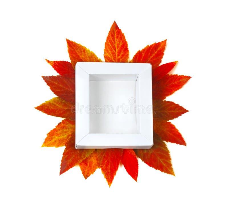 秋天嘲笑与白色框架和五颜六色的事假 库存照片