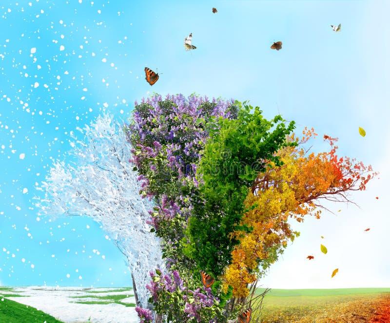 秋天四rnwinter季节春天夏天结构树 库存照片