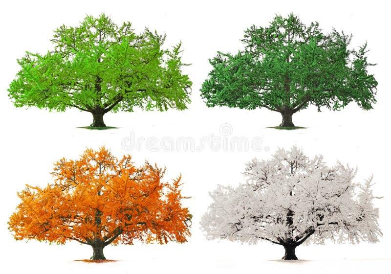 秋天四rnwinter季节春天夏天结构树 免版税库存图片