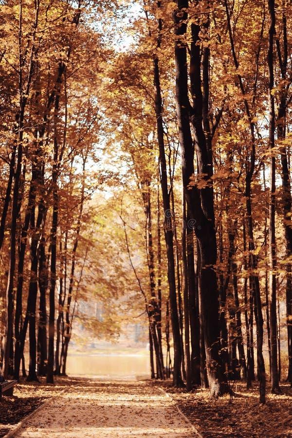 秋天在一个金黄公园 免版税图库摄影