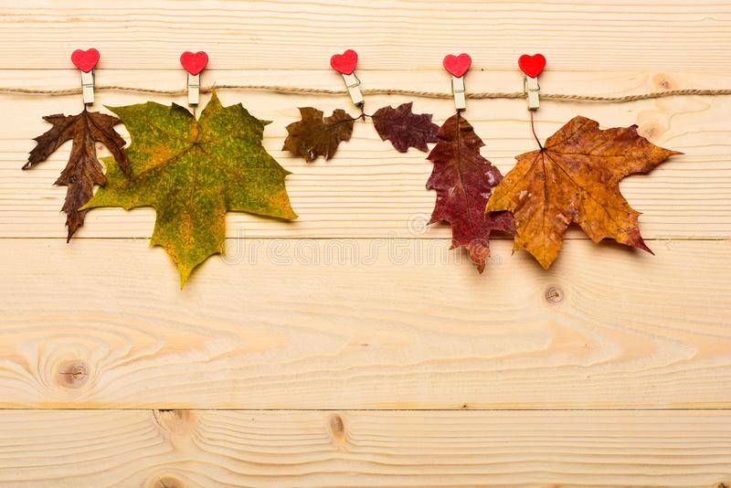 秋天在与微小的别针的麻线别住的下落的叶子有心脏的 汇集概念 槭树和橡木干叶子在自然 库存照片