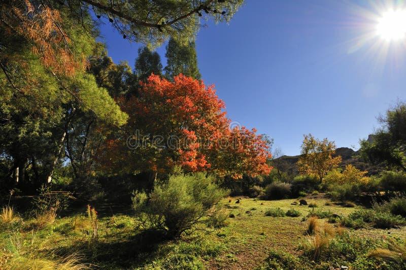 秋天在亚利桑那 图库摄影