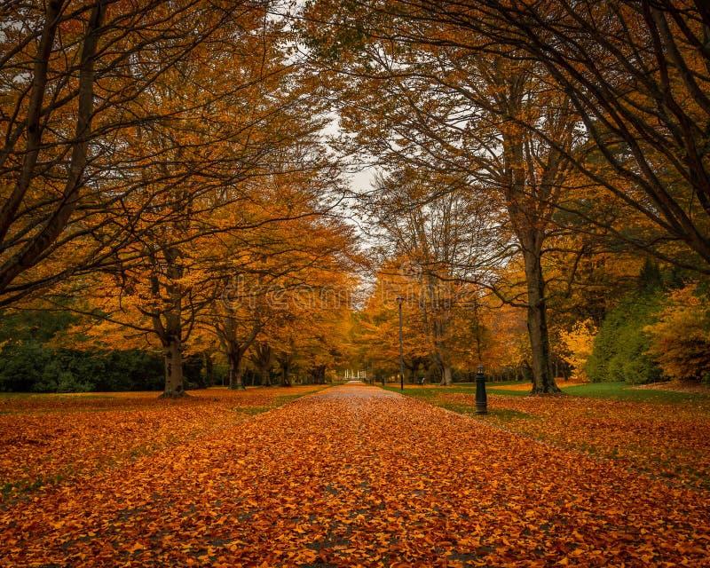 秋天在公园,因弗卡吉耳,新西兰 库存图片
