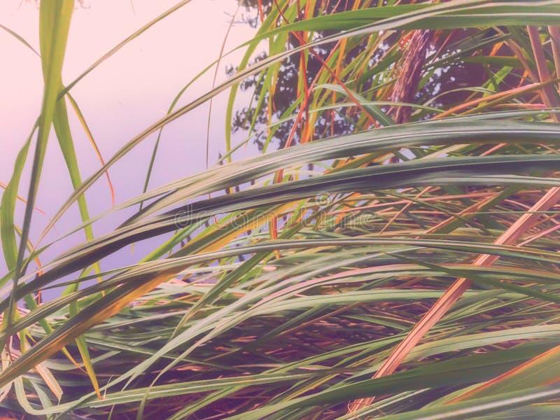 秋天在公园,在池塘附近的芦苇 秋叶 秋天的颜色 免版税库存照片