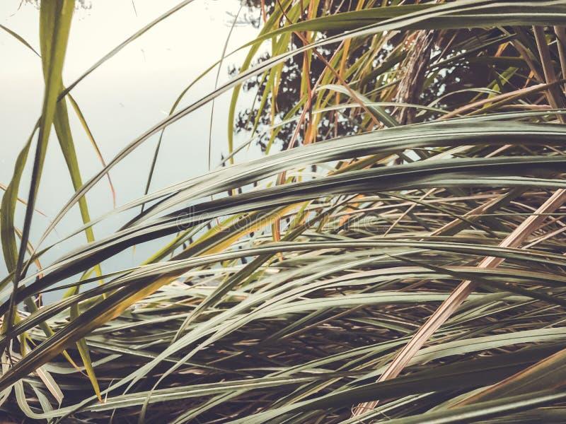 秋天在公园,在池塘附近的芦苇 秋叶 秋天的颜色 库存图片