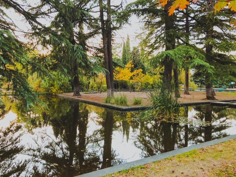 秋天在公园,树,在池塘,树的反射附近的芦苇在池塘 秋叶 秋天的颜色 免版税库存照片