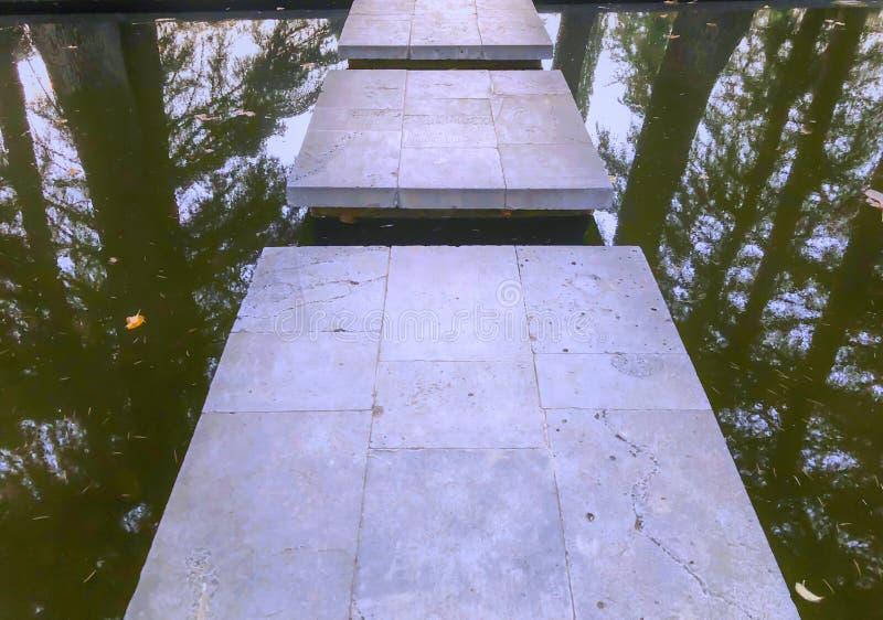 秋天在公园,树,在池塘,树的反射附近的芦苇在池塘 秋叶 秋天的颜色 免版税库存图片
