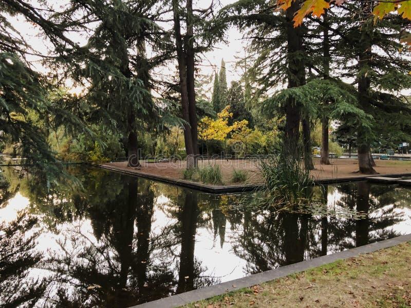 秋天在公园,树,在池塘,树的反射附近的芦苇在池塘 秋叶 秋天的颜色 免版税图库摄影