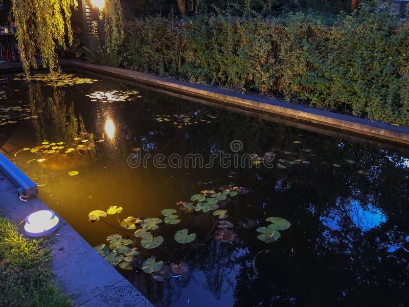 秋天在公园,树,在池塘,树的反射附近的芦苇在池塘 秋叶 秋天的颜色 库存照片