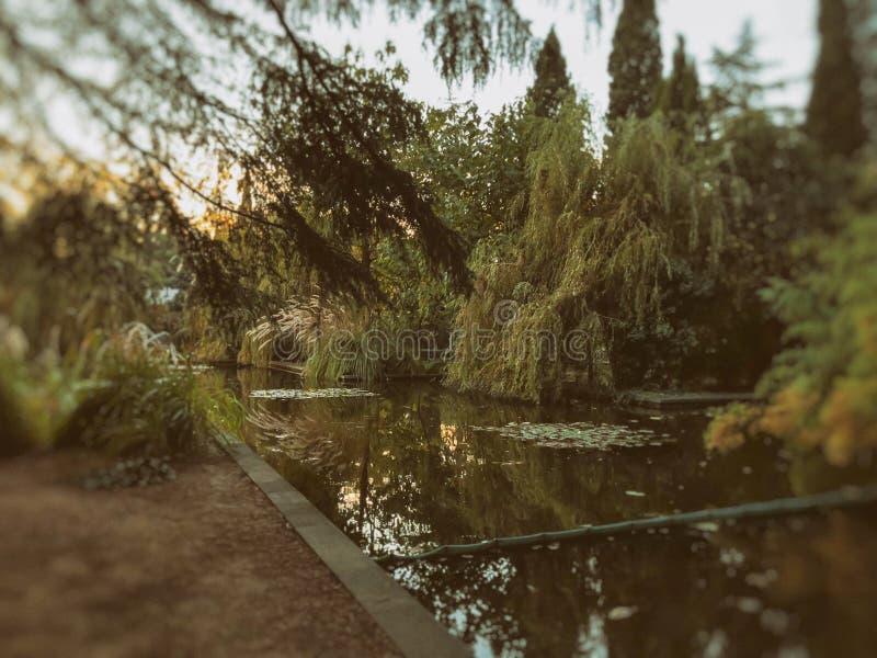 秋天在公园,树,在池塘,树的反射附近的芦苇在池塘 秋叶 秋天的颜色 Blure作用 免版税库存照片