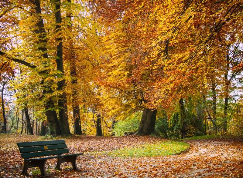 秋天在公园 与长凳的美丽的金叶子树 镇静场面 免版税库存照片