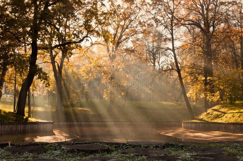 秋天在公园 清早雾,阳光 黄色树 在与霜的前景草 库存照片