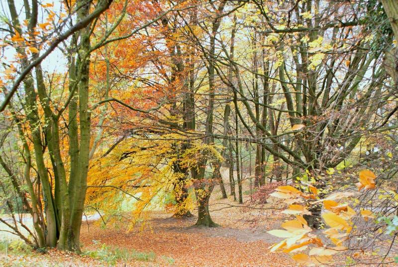 秋天在公园 Parc阿斯特丽德 免版税库存照片