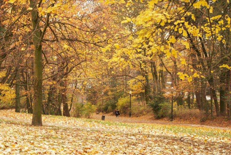 秋天在公园 Parc阿斯特丽德 免版税库存图片
