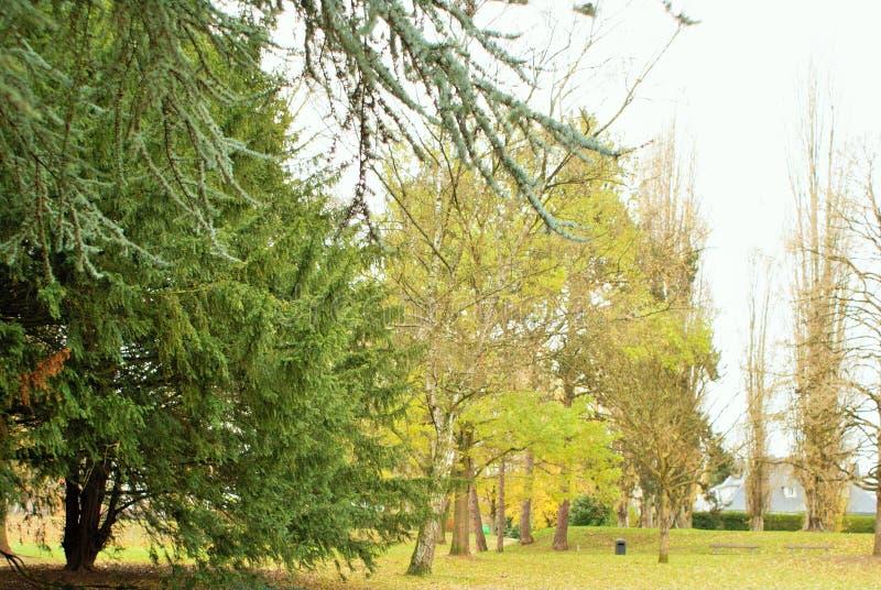 秋天在公园 Parc de Scherdermael 免版税库存图片