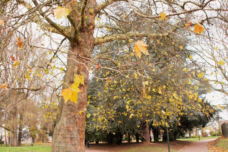 秋天在公园 Parc de Scherdermael 库存照片