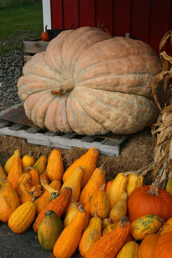 秋天在农村缅因 库存照片