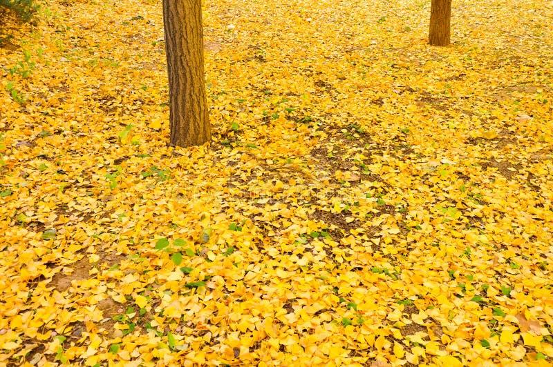 秋天在地面上的下落的叶子 图库摄影