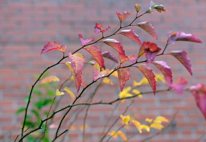 秋天在城市 库存照片
