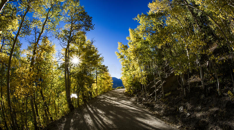 秋天在山路的亚斯本树 免版税库存图片