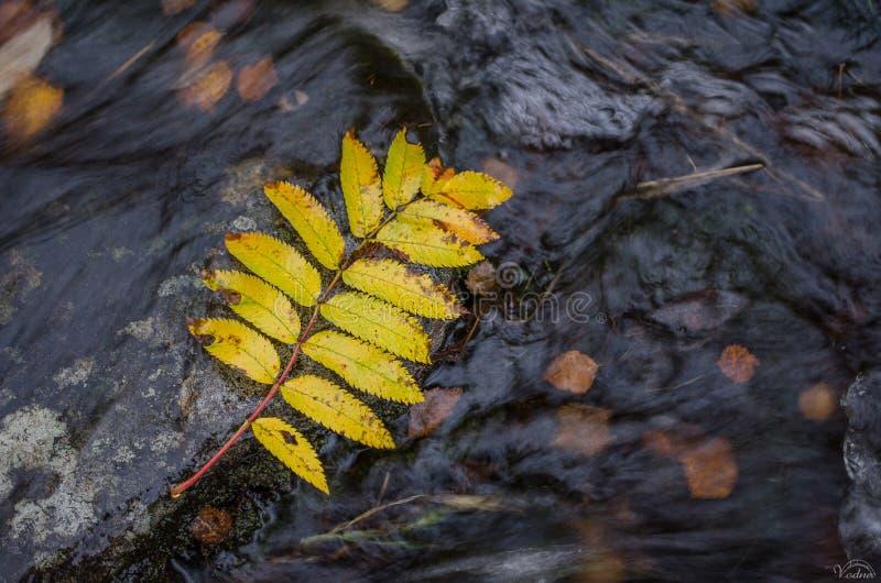 秋天在摩尔曼斯克森林里 免版税图库摄影