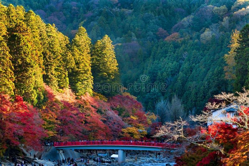 秋天在日本Korankei公园 库存照片