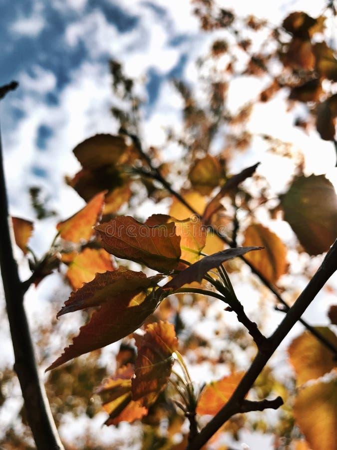 秋天在春天 免版税库存照片
