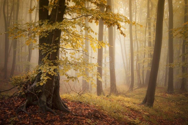 秋天在有黄色叶子的一个美丽的被迷惑的五颜六色的森林里 免版税库存图片