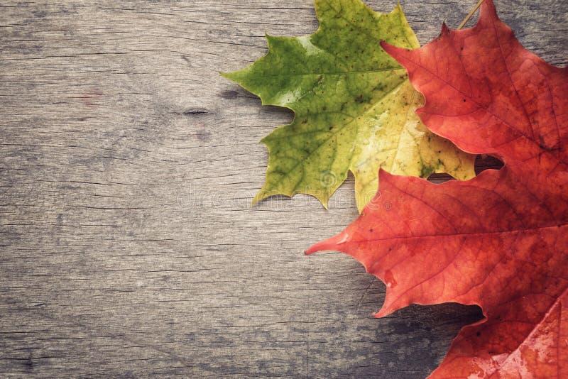 秋天在木桌上的槭树叶子 免版税库存图片