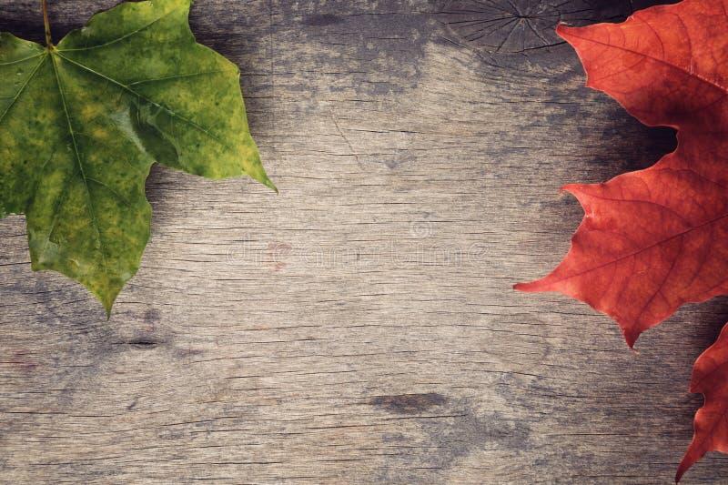 秋天在木桌上的槭树叶子 库存照片