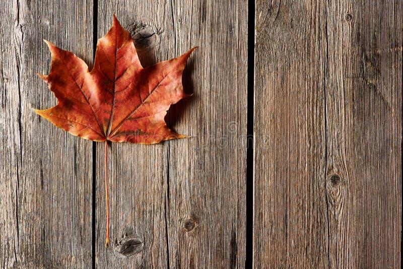 秋天在木背景的枫叶 库存照片