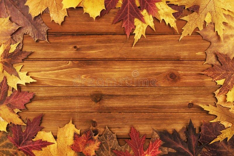 秋天在木背景的槭树叶子 顶视图 免版税库存照片