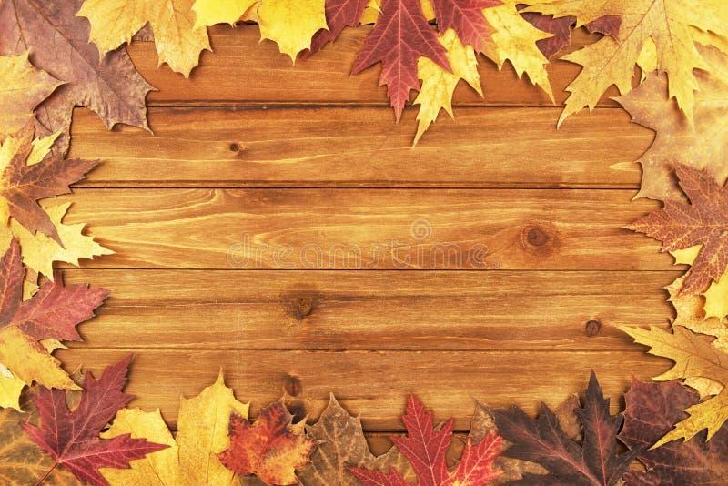 秋天在木背景的槭树叶子 顶视图 免版税库存图片