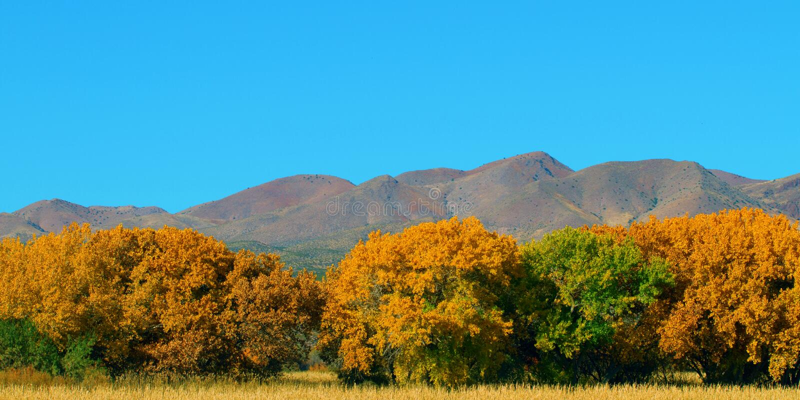 秋天在树丛del亚帕基 库存图片