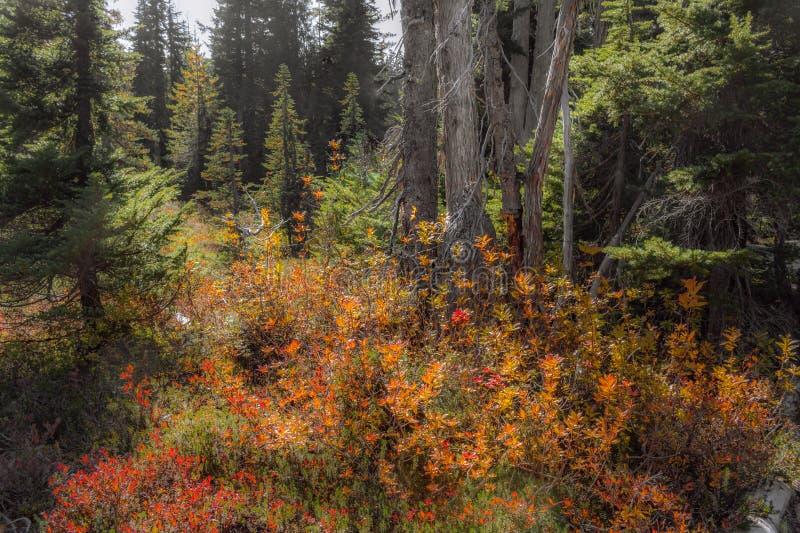 秋天在森林的草甸 库存照片