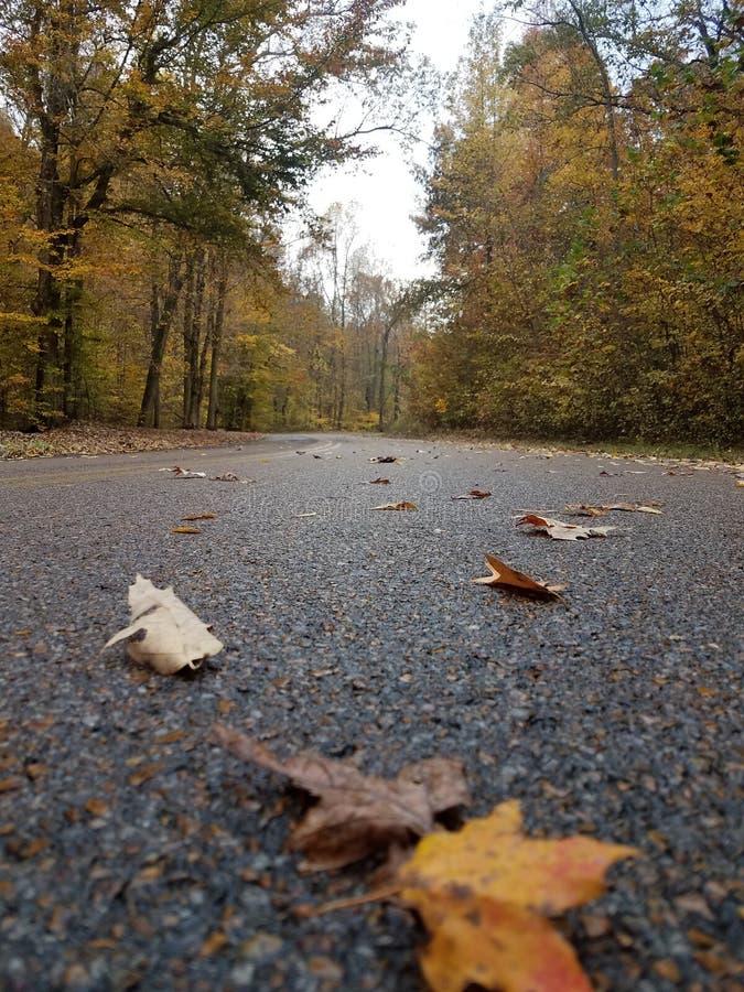 秋天在田纳西 免版税库存图片