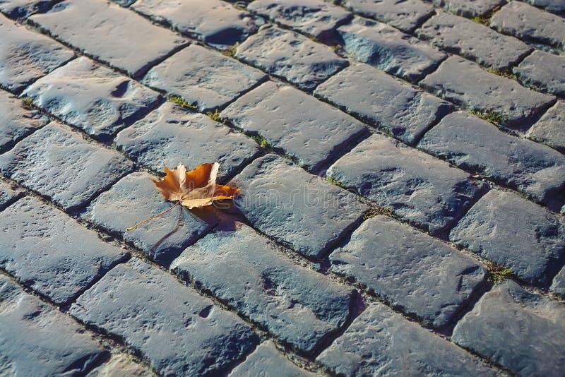 秋天在石路面的枫叶 库存图片
