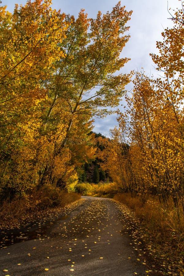 秋天在科罗拉多落矶山 图库摄影