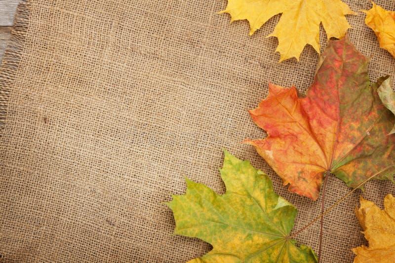 秋天在粗麻布纹理背景的槭树叶子 库存照片