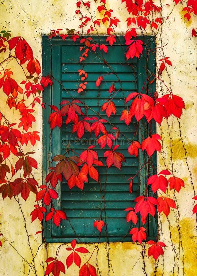 秋天在纳帕谷把盖墙壁留在 免版税库存图片