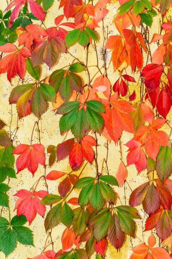 秋天在纳帕 免版税库存图片