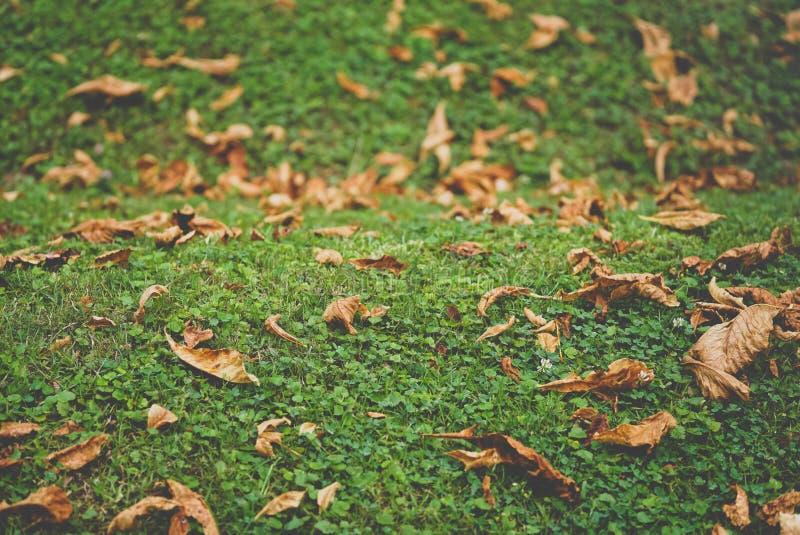 秋天在绿草的黄色叶子 免版税库存照片