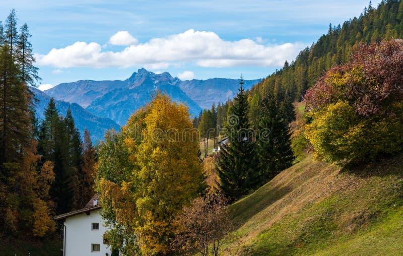秋天在达沃斯格里松州瑞士,黄色色的树 库存图片