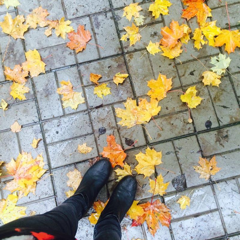 秋天在这里 免版税库存照片