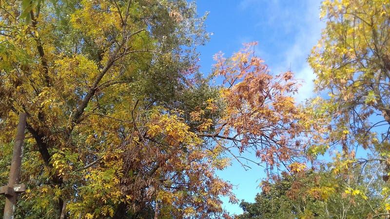 秋天在这里 库存图片
