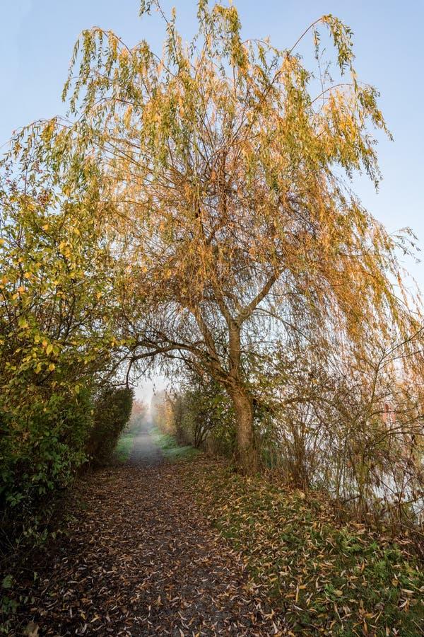 秋天在道路的色的树木天棚 库存照片