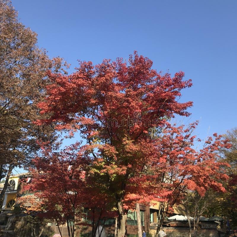 秋天在韩国 免版税库存图片