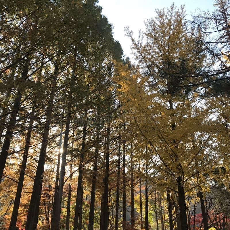 秋天在韩国 免版税库存照片