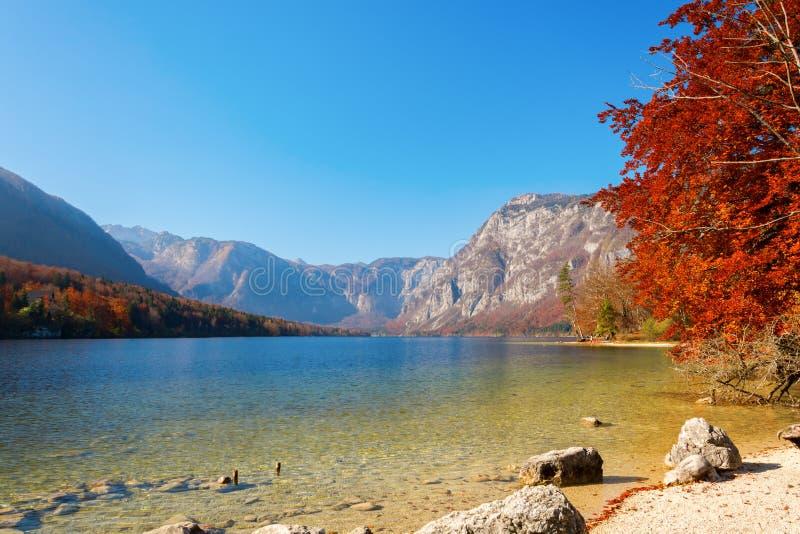 秋天在Bohinj 免版税库存照片